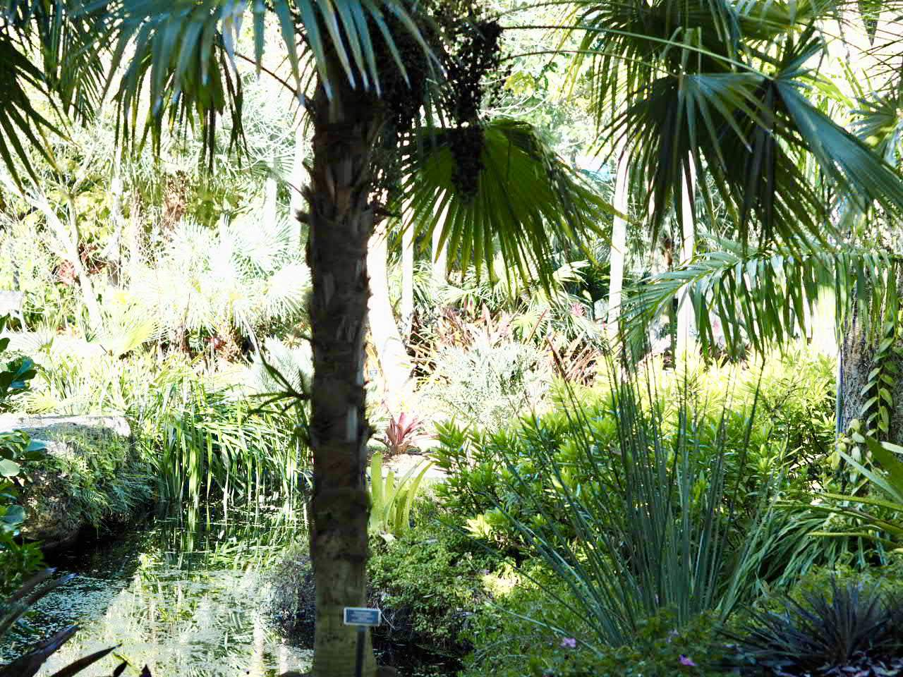 My Visit To The Naples Botanical Garden A Hidden Gem Diana 39 S Healthy Living