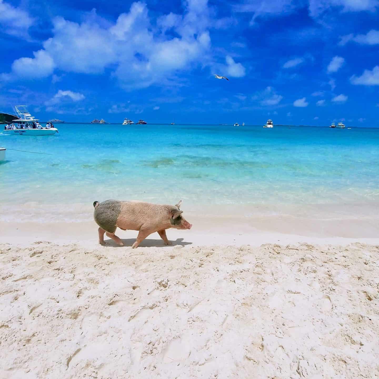 Top Things to do in Exuma Bahamas: Travel Guide | Diana's