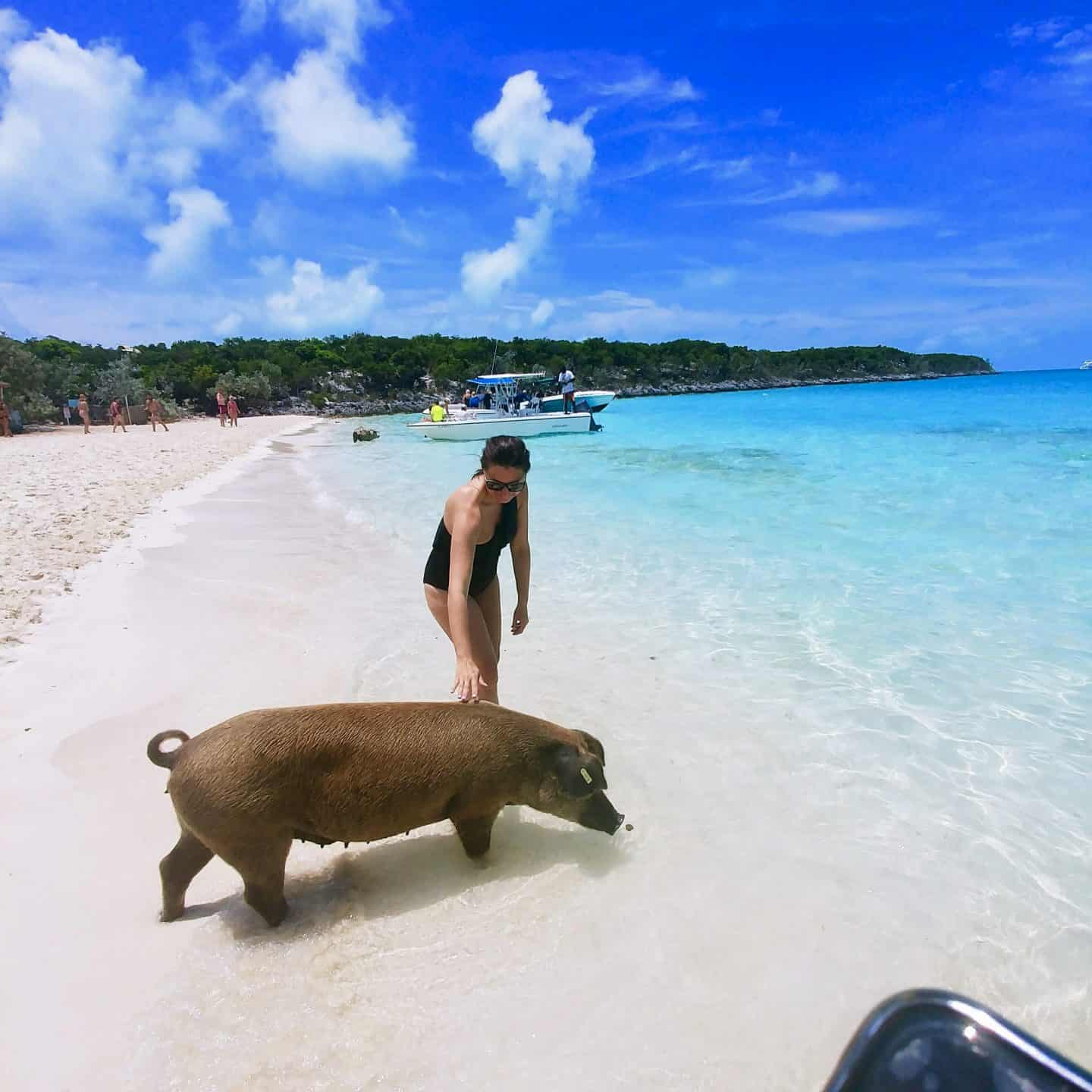 Travel Guide to The Exumas Bahamas petting a pig on pig island on the beach with blue waters in exuma