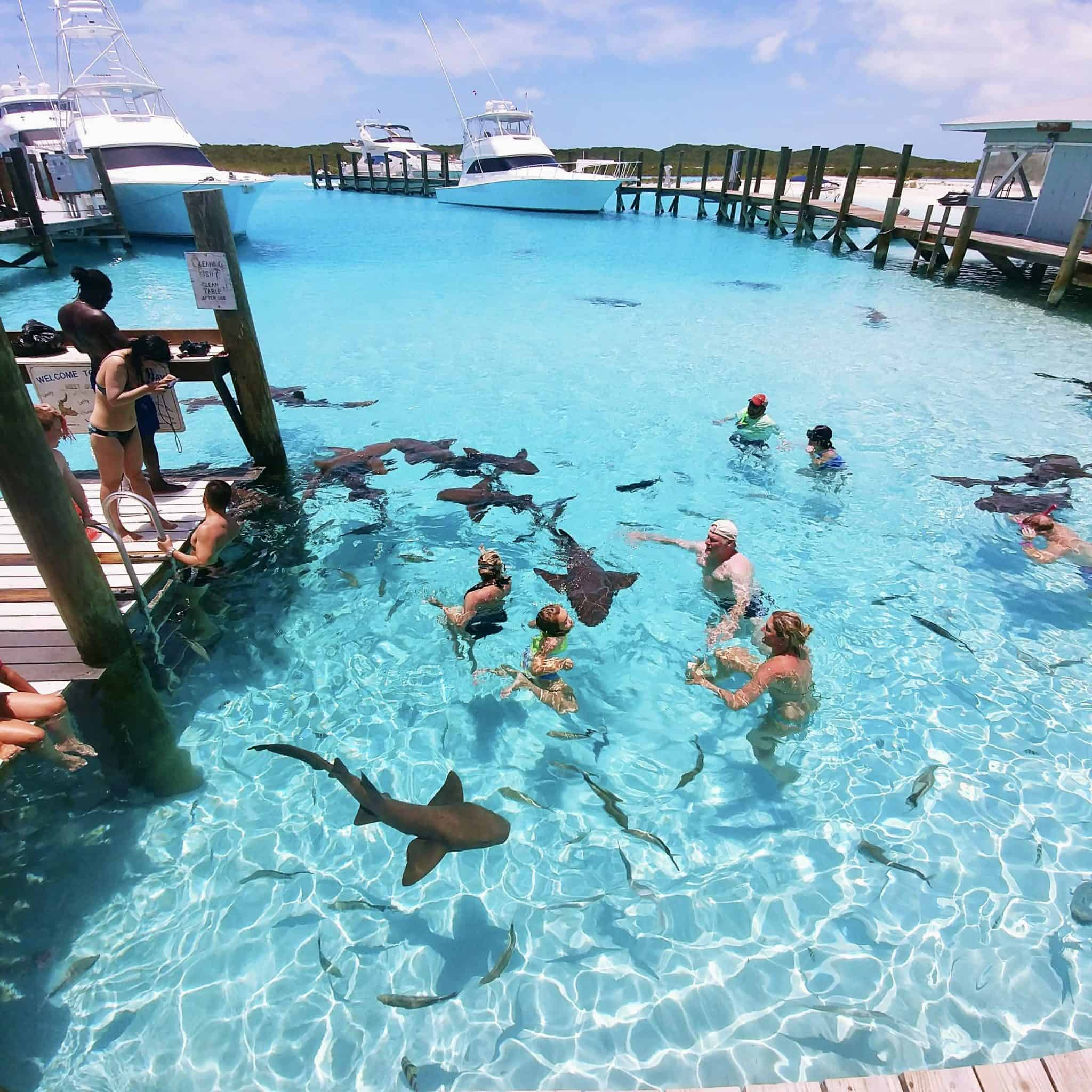 Travel Guide to The Exumas Bahamas swimming with the sharks in exuma
