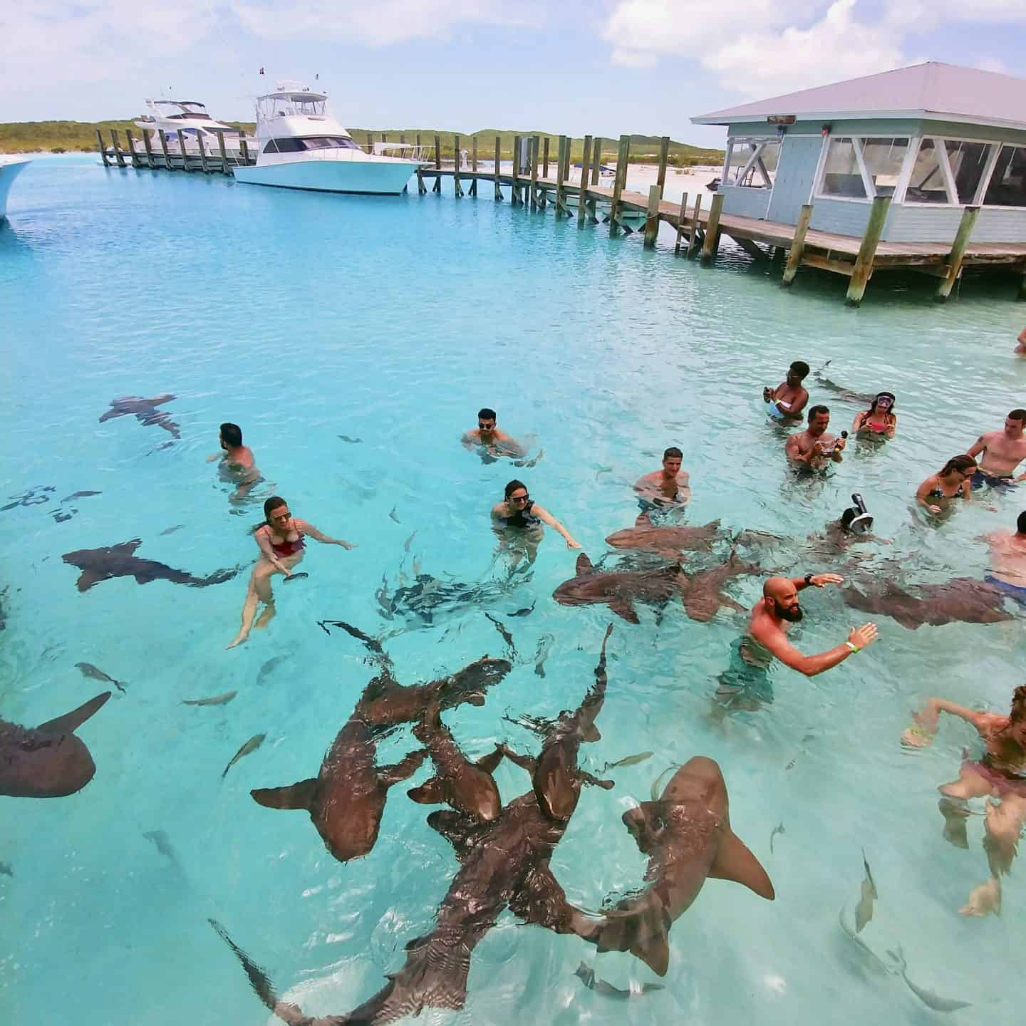Travel Guide to The Exumas Bahamas swimming with the nurse sharks in Staniel Cay Exuma