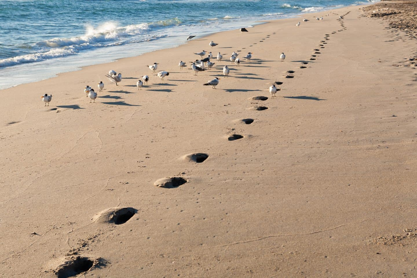 running prints on beach with seagulls